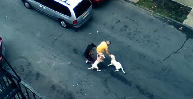 Atak dwóch pitbulli na ulicy